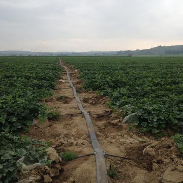 Matériel d'irrigation pour l'agriculture